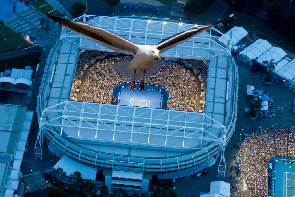 Bird flying over Rod Laver Arena - Melbourne